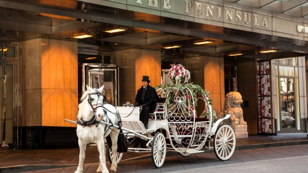 Peninsula Princess for a Day with Horse Drawn Carriage