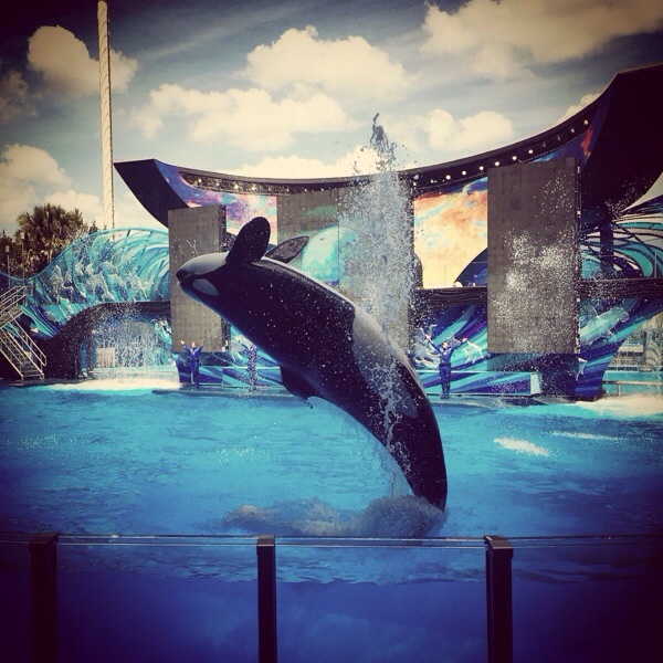 7 Must Do Attractions at Sea World Orlando