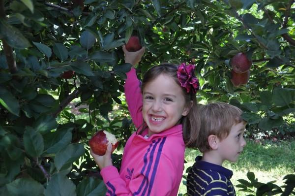 apple orchard straighttalk