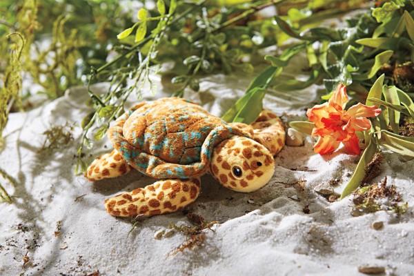Lea Sea Turtle Lifestyle-LR