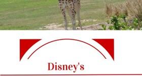 Disney's Wild Africa Trek Review Tips and Photos