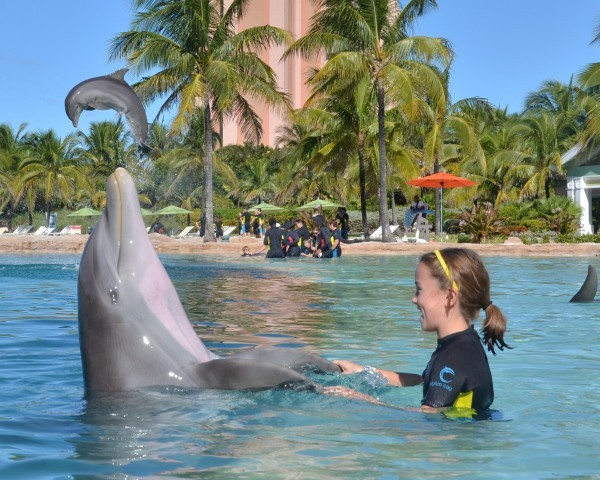 Dolphins Atlantis Dancing