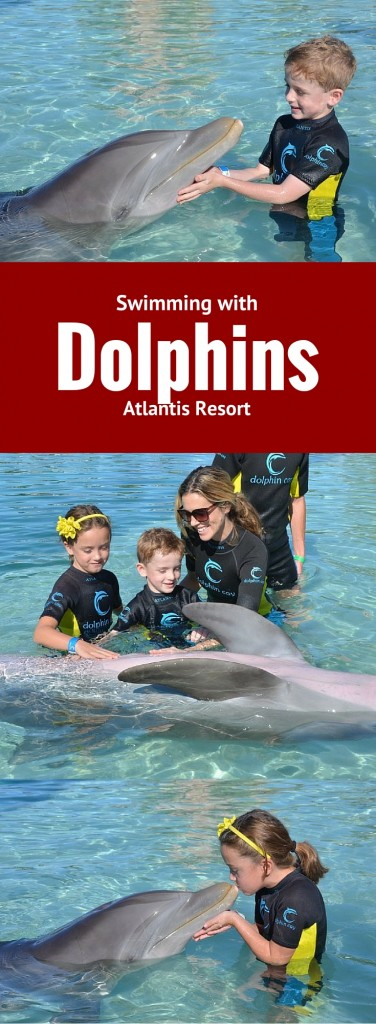 Tips for Swimming with Dolphins at the Atlantis
