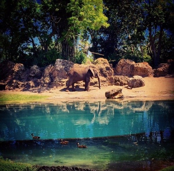 8 Must Do Activities at Disney's Animal Kingdom
