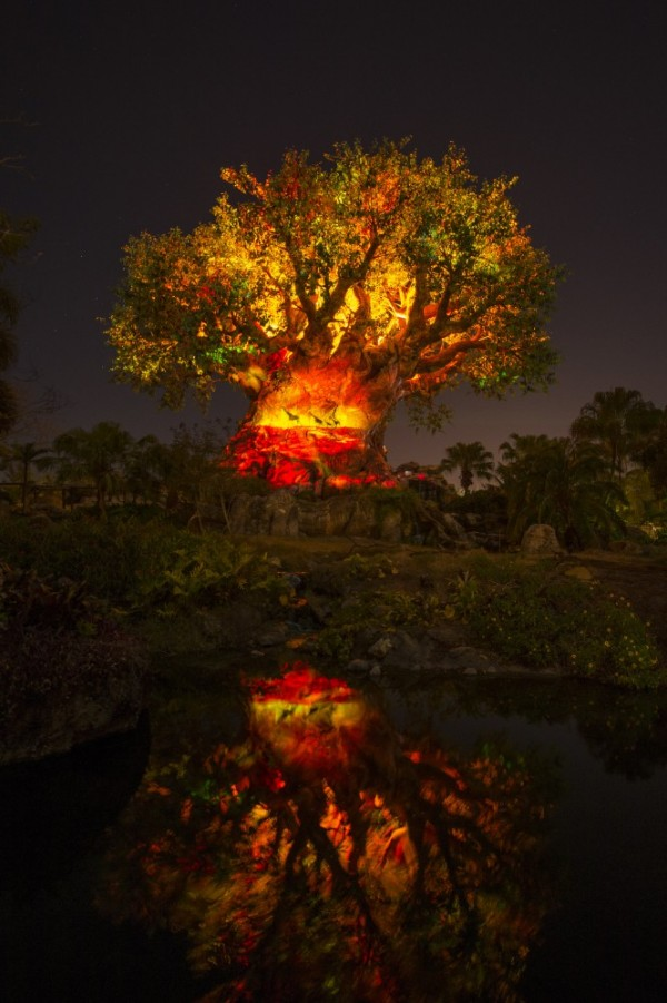 Tree of Life Animal Kingdom Light show