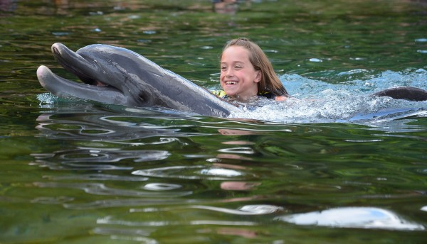 Details on Swimming with Dolphins at Discovery Cove
