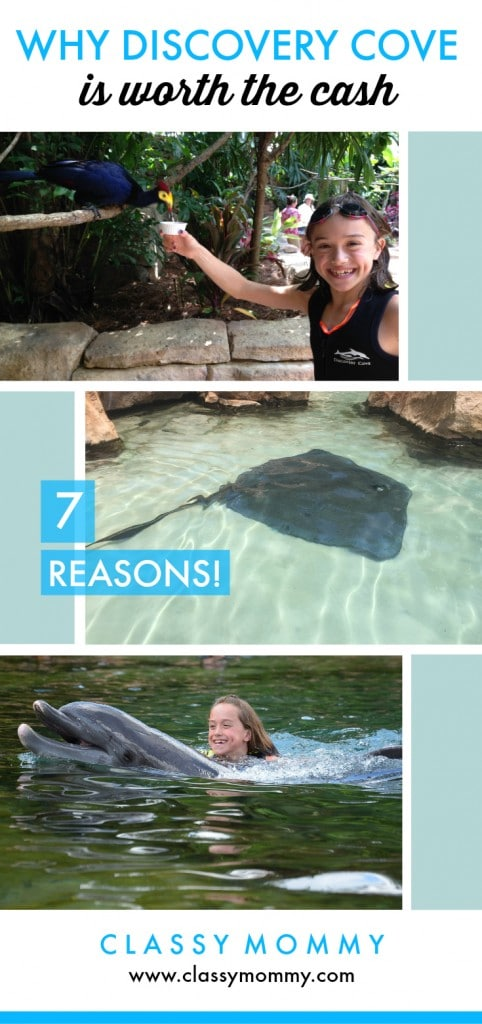 7 Reasons Why Visiting Discovery Cove Is Worth the Price