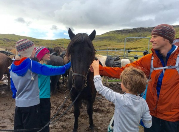 horses-in-iceland
