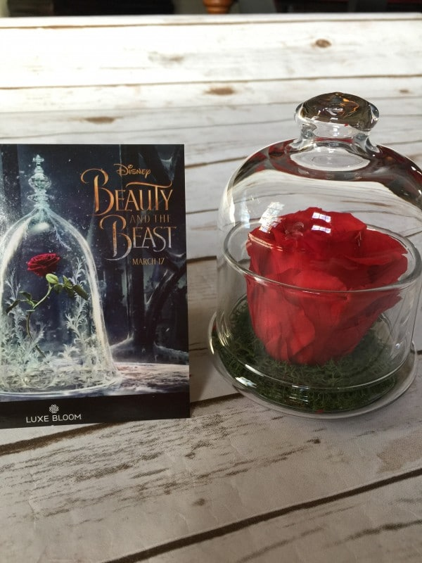 Luxe Bloom Beauty and the Beast Inspired Rose in a Glass Jar