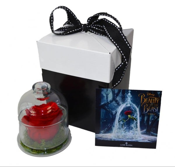luxe bloom beauty and the beast glass cloche