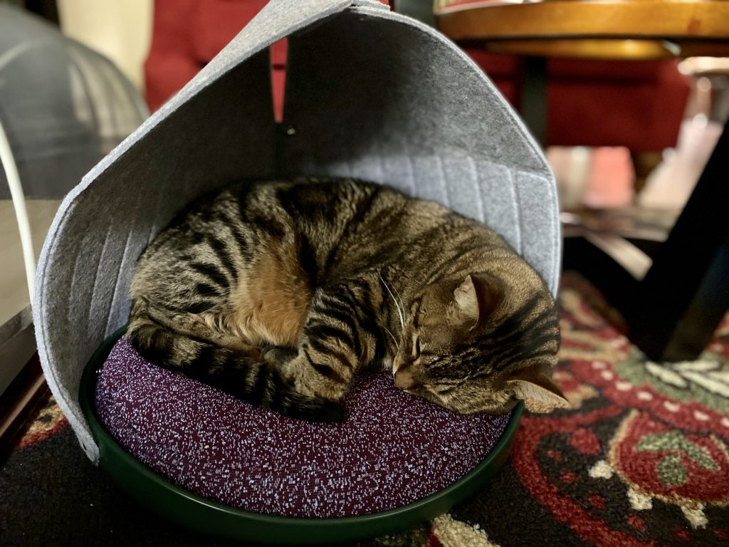 Cat Person Cat Canopy Review