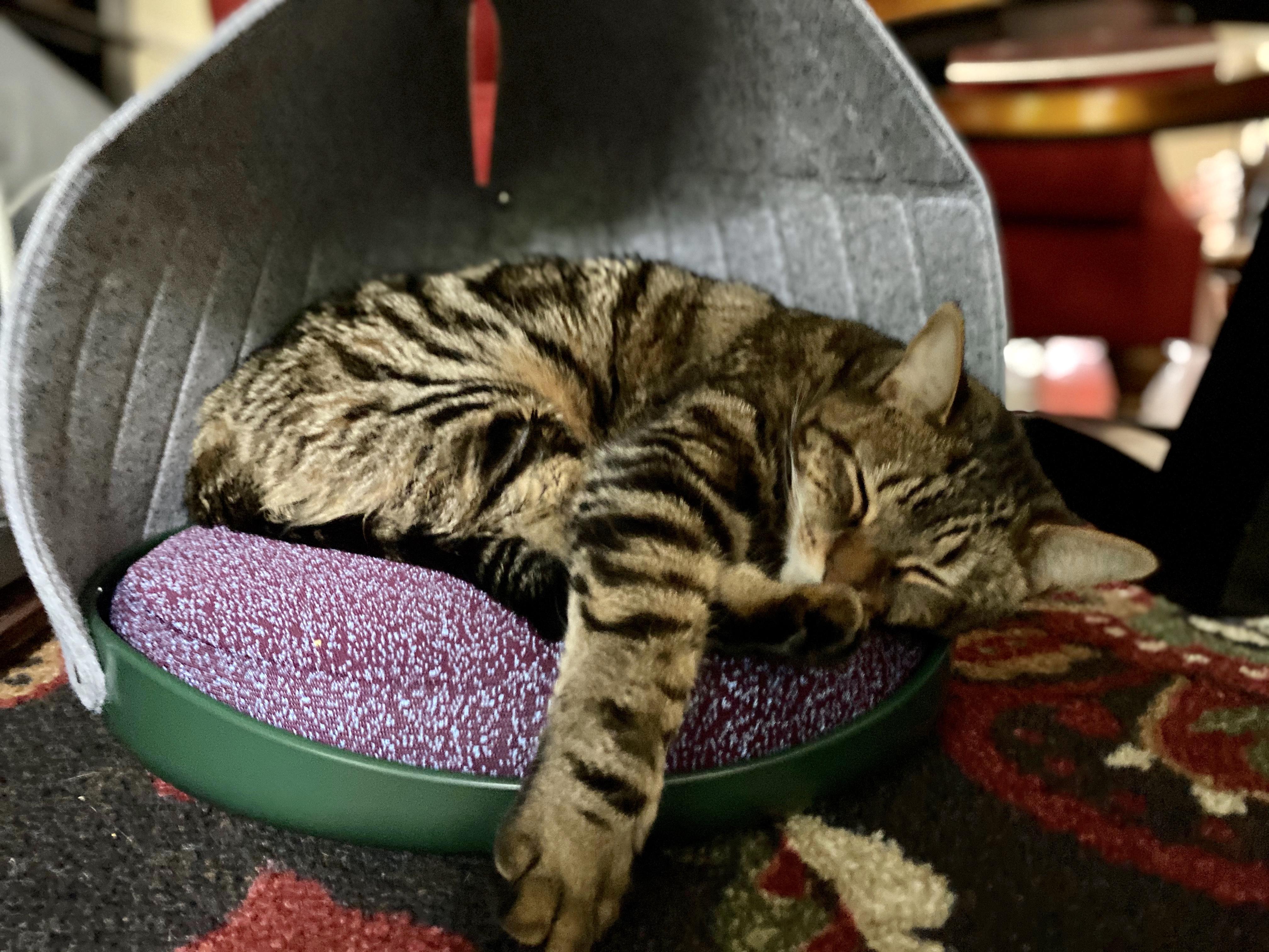 Best Comfortable Cat Tent Bed